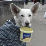 На грани банкротства оказались 8 миллионов россиян