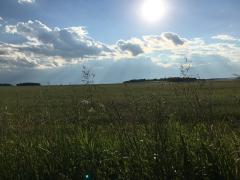 Земле нужен хозяин: Россельхознадзор заставляет землевладельцев бороться с сорняками