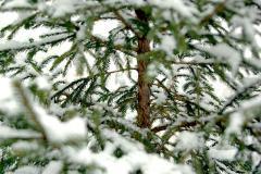 В Челябинске начались рейды по выявлению нелегальных торговцев елками