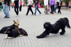 Ситуацию с приемником для бездомных животных в Челябинске взяла под контроль прокуратура