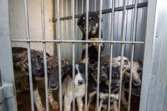 Ситуация вокруг приемника для животных в МУП «ГорЭкоЦентр» заставила объединиться зоозащитников