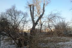 Глава Челябинска пригрозил штрафами за неправильную обрезку деревьев